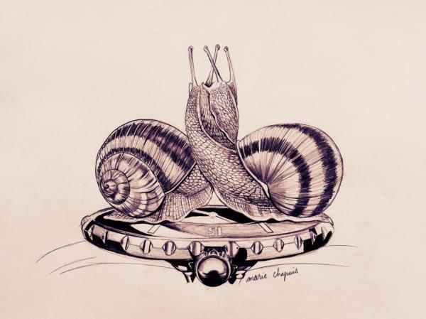 Snails, watch, time, illustration, pencil, marie chapuis
