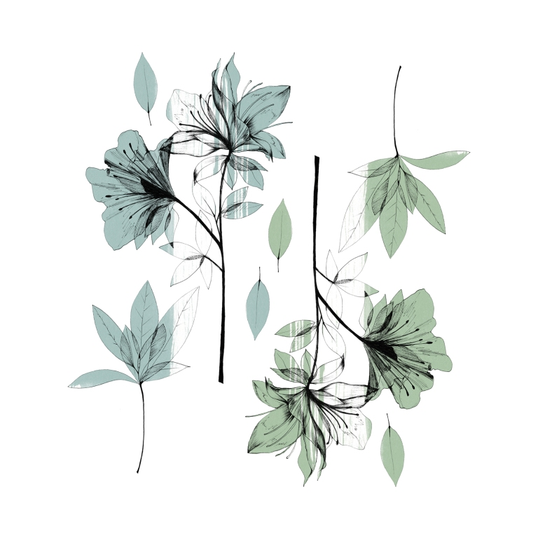 vegetal_illustration_MAX_atelier22
