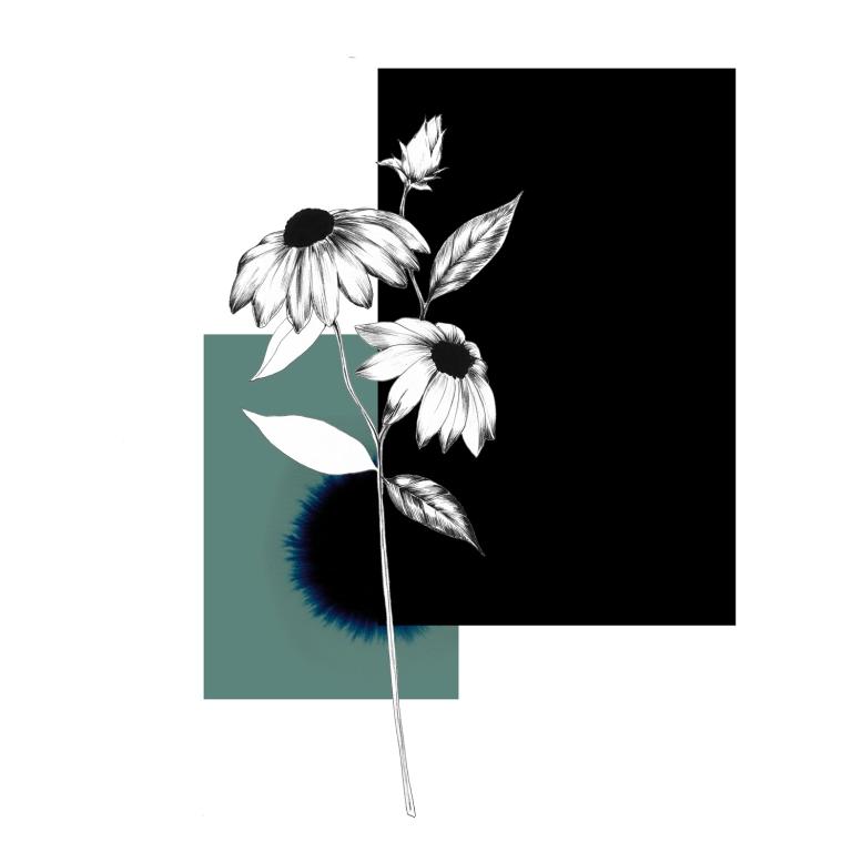 vegetal_illustration_MAX_atelier222